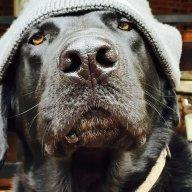 Ramdog